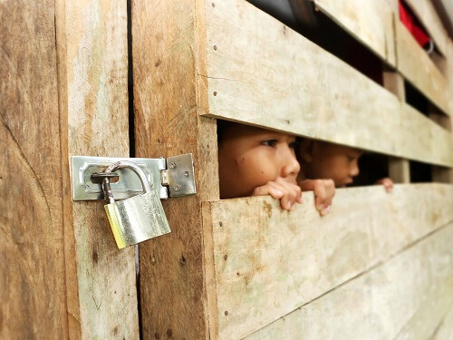 children looking through fence for blog post featured image
