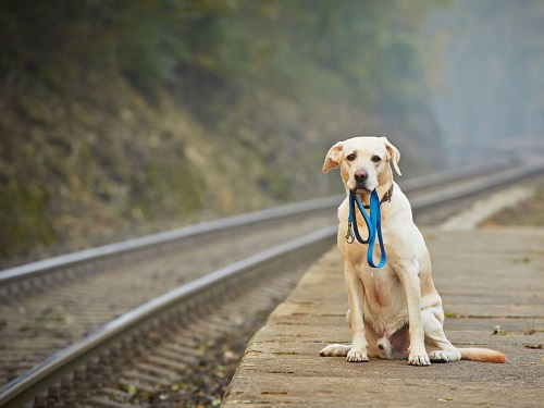 dog holding his own leash for blog featured image